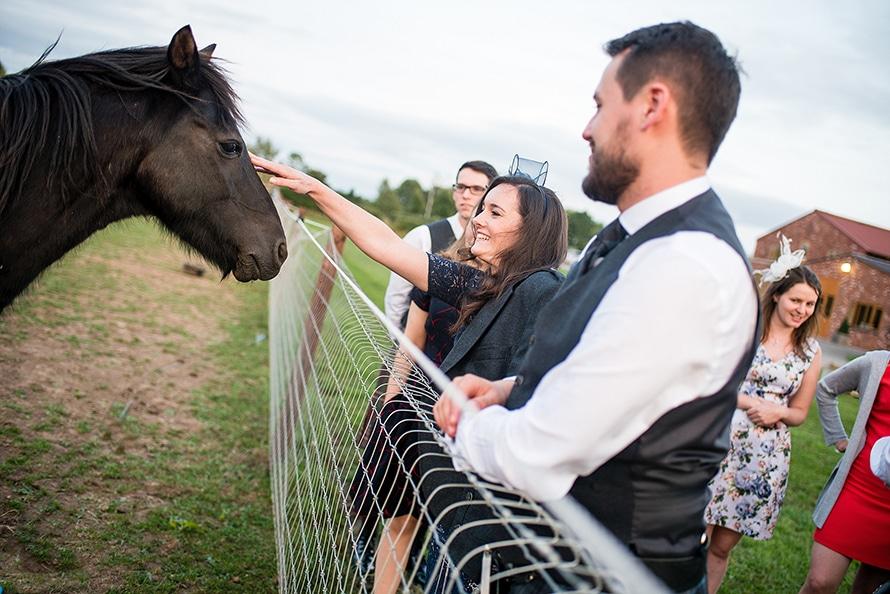 horses at an outdoor wedding