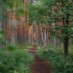 Woodland burial ground for outdoor funerals